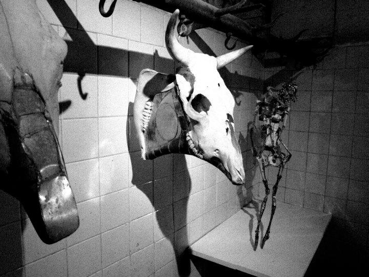 Meat/ing art – Venice
